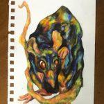 animalia rat