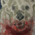 animalia orso joey newman